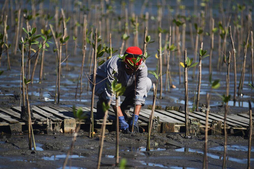 Trabalhador no Dia Mundial de Proteção aos Manguezais em Duque de Caxias, perto do Rio de Janeiro, Brasil, 26 de julho de 2021