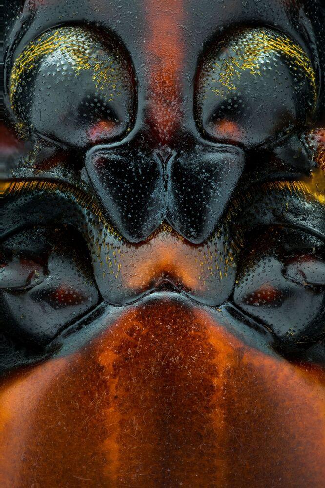 Foto Pareidolia, do fotógrafo dos Emirados Árabes Unidos Yousef Al Habshi Al Hashmi, quarto lugar na categoria Portfólio. Pareidolia é a tendência para a percepção incorrecta de um estímulo como objecto, padrão ou significado conhecido pelo observador, tal como ver formas nas nuvens, ver rostos em objetos inanimados ou padrões abstractos. O conjunto mostrado tenta encontrar rostos com características únicas sob o microscópio e dentro de uma área minúscula que mal pode ser vista