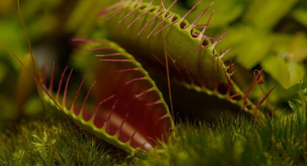 Planta carnívora (imagem referencial)