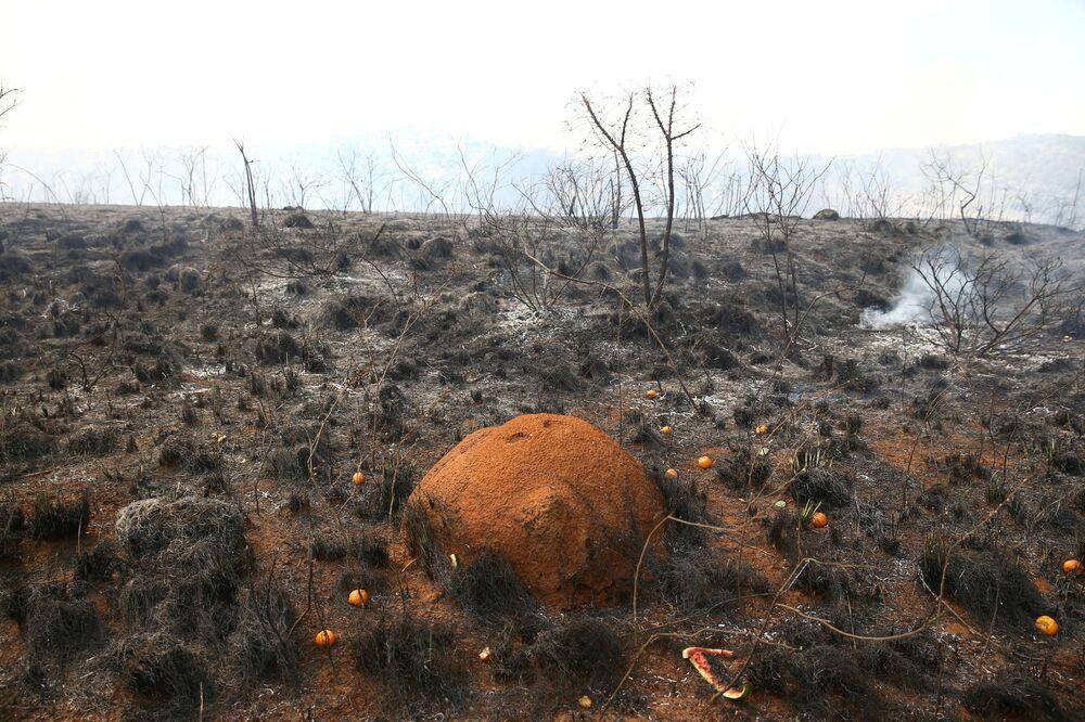Formigueiro nas cinzas após fogo no Parque Estadual do Juquery, em Franco da Rocha, na Grande São Paulo, 23 de agosto de 2021