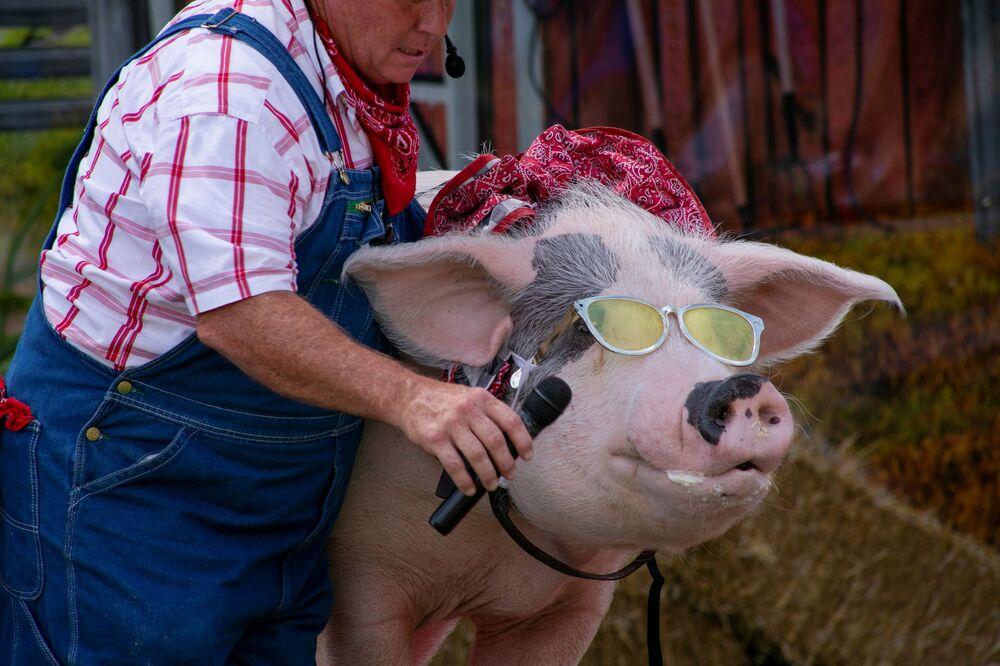 Fazendeiro dá ao porco um microfone para cantar durante um espetáculo de comédia The Pork Chop Revue na feira estadual de Kentucky em Louisville, EUA