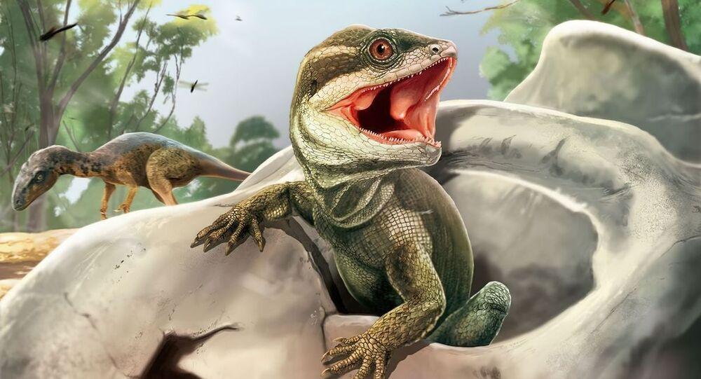 Antigo ancestral réptil, uma nova espécie chamada Taytalura alcoberi, descoberta por pesquisadores na Argentina