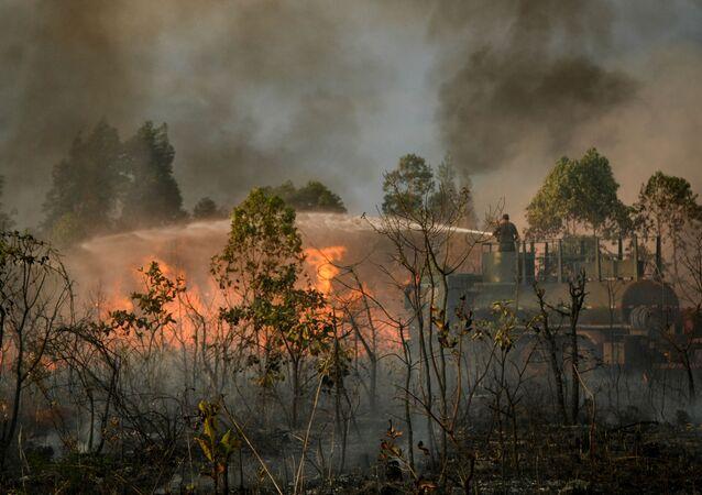 Fogo consome grande área de cerrado às margens da via Estrutural, próximo à cidade do Automóvel, em Brasília (foto de arquivo)