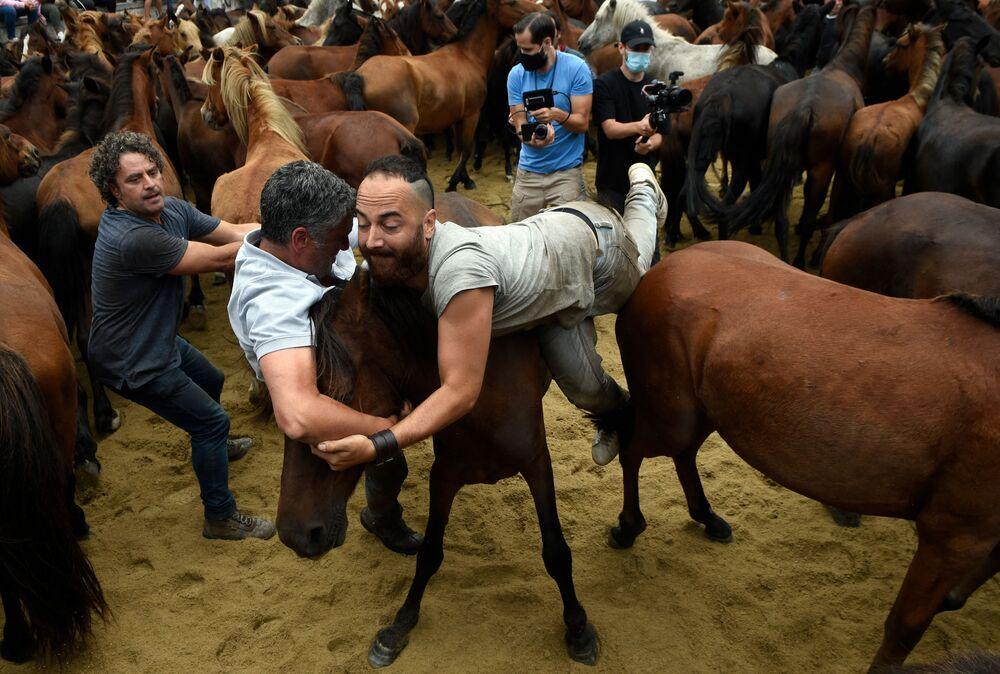 Homens lutam com cavalos selvagens durante evento tradicional Rapa das Bestas na cidade de Sabucedo, Galícia, Espanha