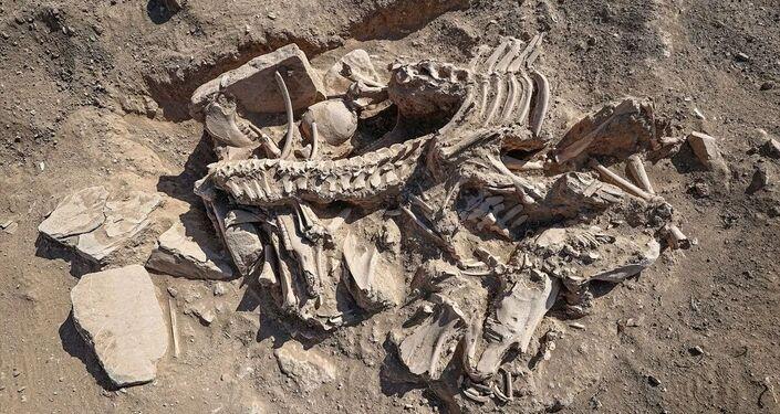 Sepultura de pessoa enterrada como quatro cavalos, vacas, uma ovelha e um cão, descoberta por arqueólogos turcos no local do antigo castelo de Cavustepe perto da cidade de Van, no leste no país