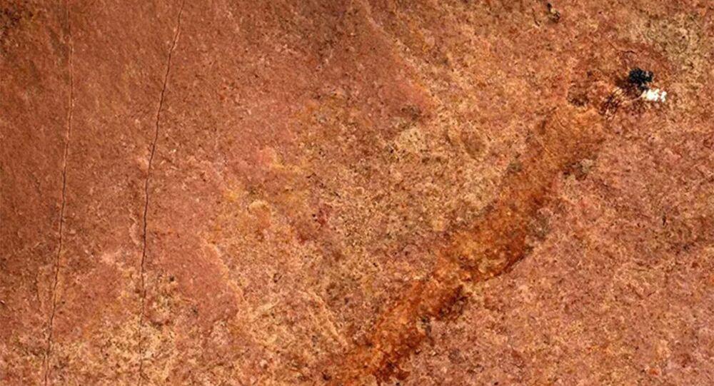 Pesquisadores da Universidade de Missouri encontraram um paleossolecídeo, um raro fóssil de 500 milhões de anos na América do Norte