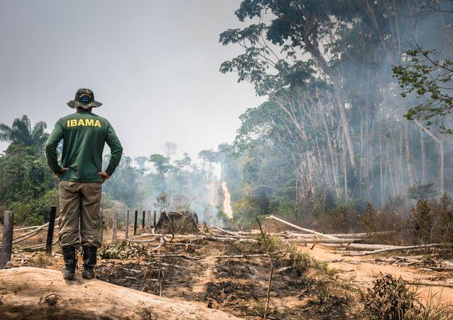 Operação de Fiscalização na Floresta Nacional do Jamanxim, no Pará