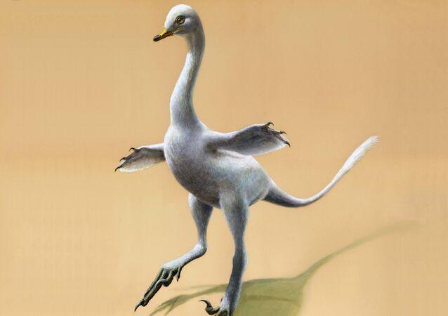 Dinossauro Halszkaraptor escuilliei (ilustração)