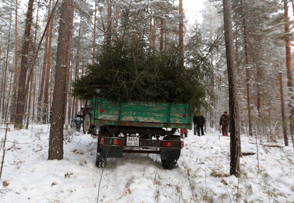 Corte de árvores de Natal