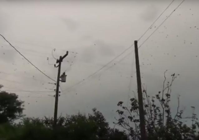 Aranhas em redes de eletricidade