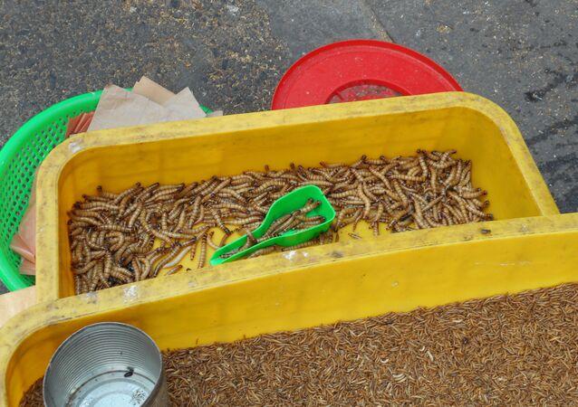 Larvas (imagem referencial)
