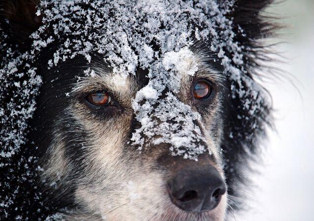 Cachorro em neve (imagem ilustrativa)