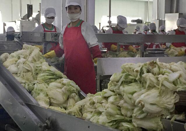 Funcionários de uma fábrica de kimchi, nos arredores de Pyongyang
