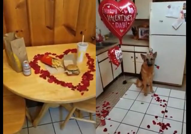 Cachorro esperto prepara jantar especial para o Dia de São Valentim