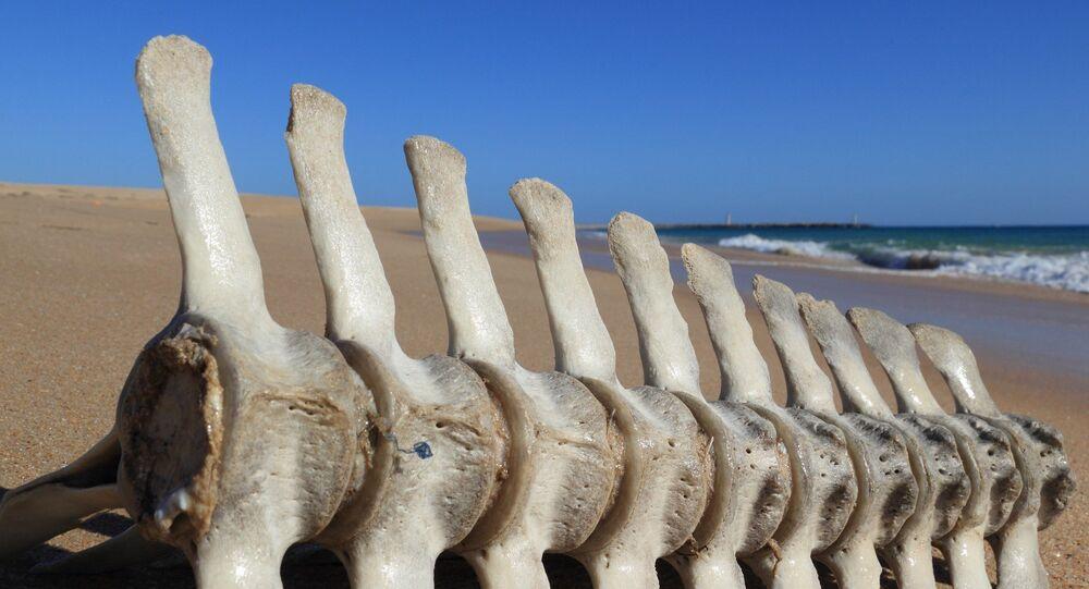 Esqueleto na praia (imagem referencial)