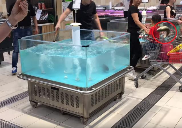 Peixe 'ninja' decide ir embora de supermercado em um carrinho