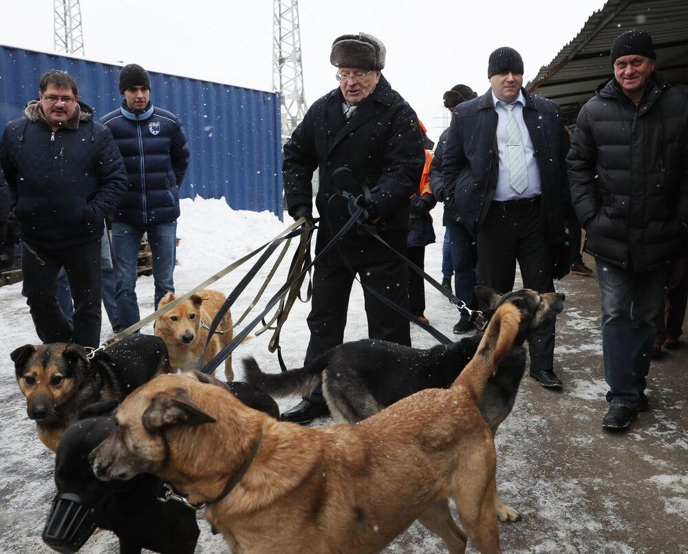 Líder do Partido Liberal Democrata, Vladimir Zhirinovsky, visita asilo para cachorros sem teto em Moscou