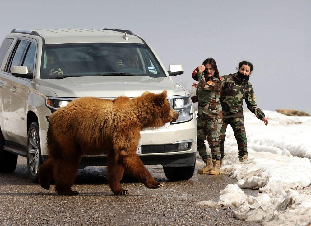 Mulheres militares curdas das forças peshmerga e jornalistas soltam um urso salvo por ativistas para seu habitat natural