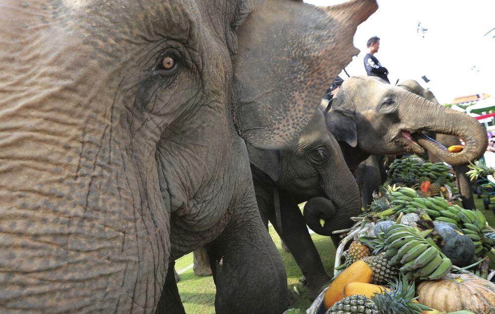 Elefantes se alimentam antes de uma partida de polo em Bangkok, na Tailândia