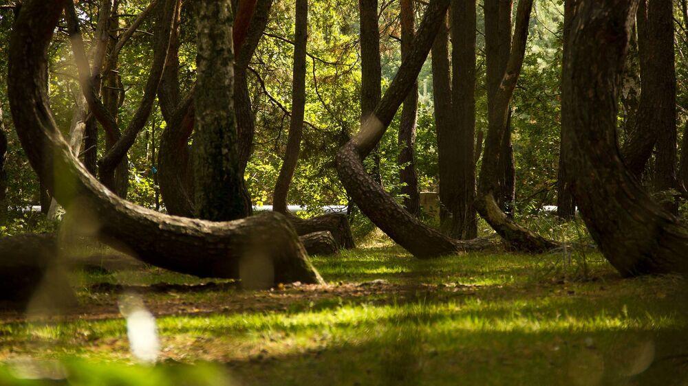 Floresta Torta é um bosque de pinheiros curvados que se encontram nos arredores da povoação de Nowe Czarnowo, no oeste da Polônia. No bosque há mais de 400 árvores, com curvas de 90° na base. Todos os pinheiros crescem na direção norte e são rodeados de árvores comuns. Até hoje, não se sabe o que causou a deformação dos pinheiros