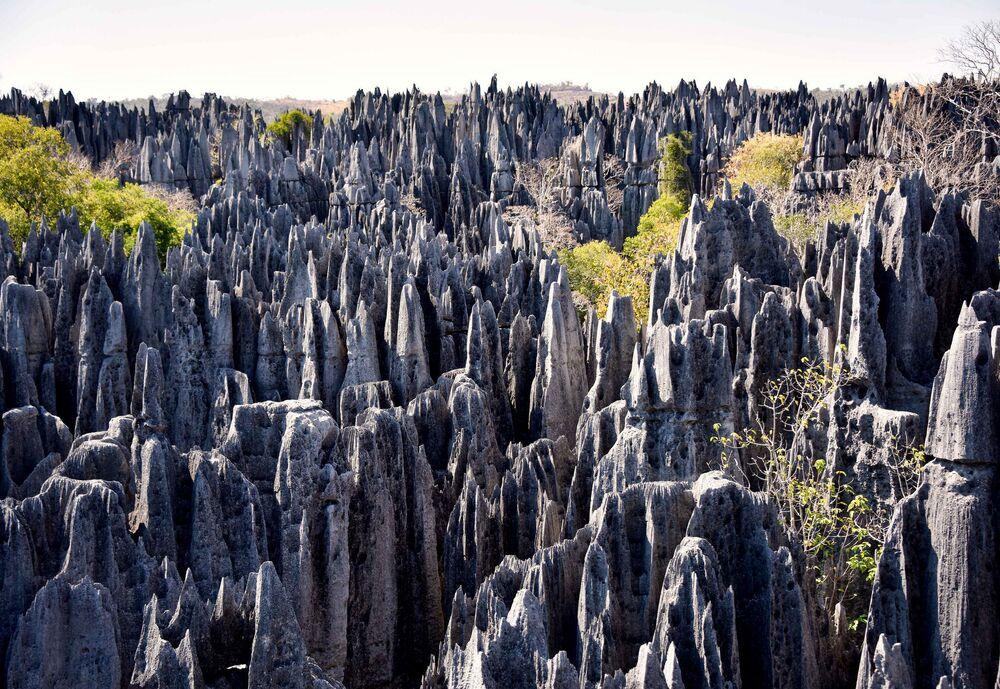 Floresta na Reserva Natural Integral do Tsingy de Bemaraha, na ilha de Madagascar. O nome da reserva vem do topônimo Bemaraha (cadeia montanhosa) e do nome malgaxe (língua indígena de Madagascar) que supostamente simula o som que produzem os picos das montanhas se bater nelas. A floresta, assim como alguns animais da reserva, faz parte do Patrimônio Mundial da UNESCO