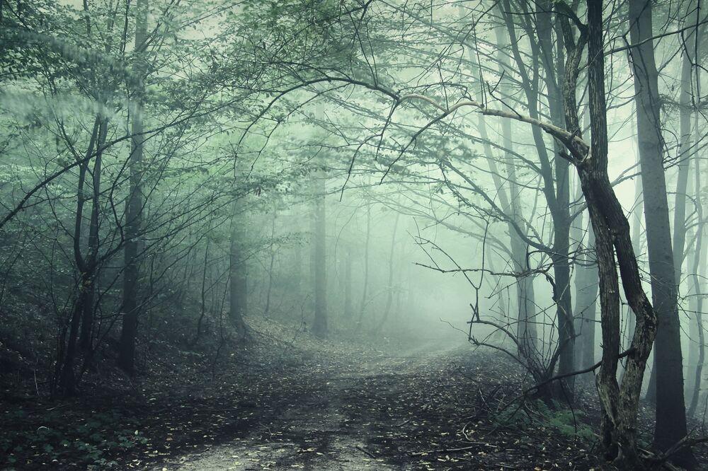 Perto da cidade romena de Cluj-Napoca se encontra a floresta de Hoia-Baciu. Moradores locais chamam este lugar de Triângulo das Bermudas. Muitos dos habitantes, que visitaram a floresta, queixam-se de dor física, náuseas, enxaqueca, queimaduras, arranhões, entre outros problemas