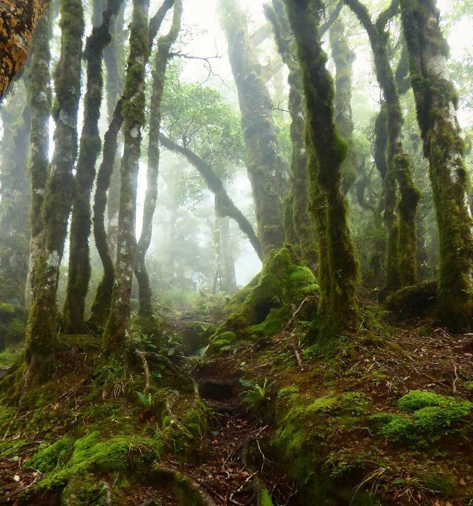 Na Nova Zelândia, conhecida por suas paisagens pitorescas, fica a chamada floresta de Goblins. Os troncos e ramos das árvores na floresta são cobertos por musgo e líquen