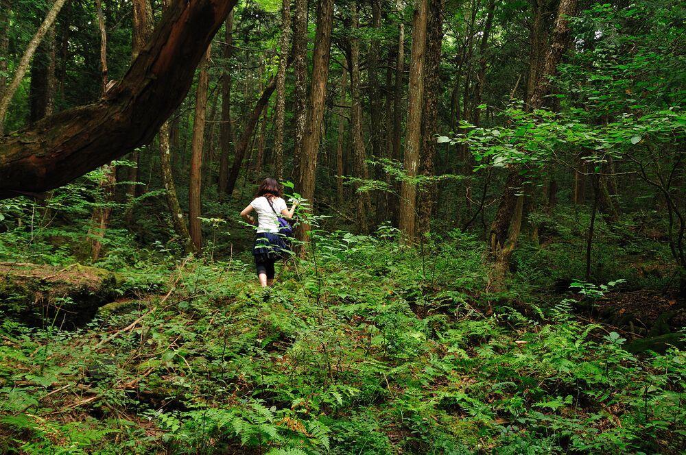 O bosque de Aokigahara, também conhecido como Mar de Árvores, localiza-se na base noroeste do monte Fuji, no Japão. As árvores no bosque crescem tão densamente que nele não pode entrar luz solar, enchendo a floresta com escuridão e silêncio assustadores. Há décadas, o lugar misterioso tem a triste fama de atrair suicidas