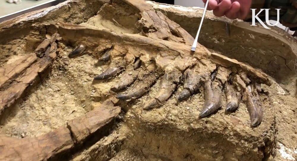 Restos de tiranossauro achados em Montana, nos EUA
