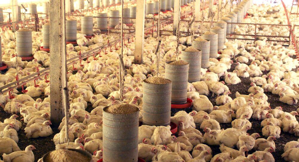 Proibição de importação de frango brasileiro pela UE deve causar 30 mil demissões no setor