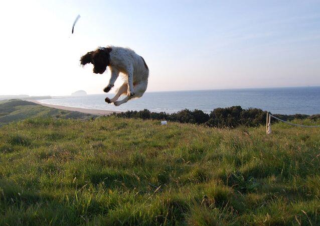Cachorro pairando no ar (imagem referencial)