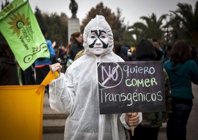 Protestos contra os alimentos transgênicos durante a manifestação contra a Monsanto no Chile. Um manifestante com um cartaz que leia Eu não quero comer transgênicos, durante as manifestações contra a Monsanto Co - uma das maiores empresas de produção dos alimentos trasgênicos, na cidade de Santiago, 23 de maio de 2015.