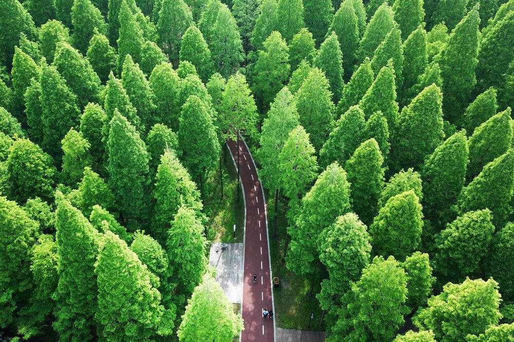 Vista aérea do parque Yellow Sea National Forest Park, na China