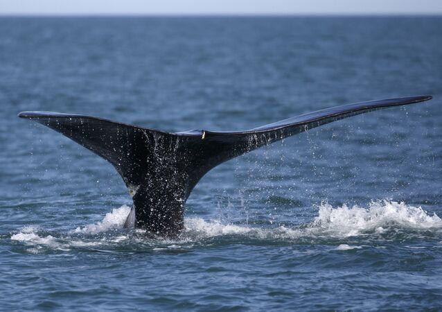 Cauda de uma baleia (foto de arquivo)