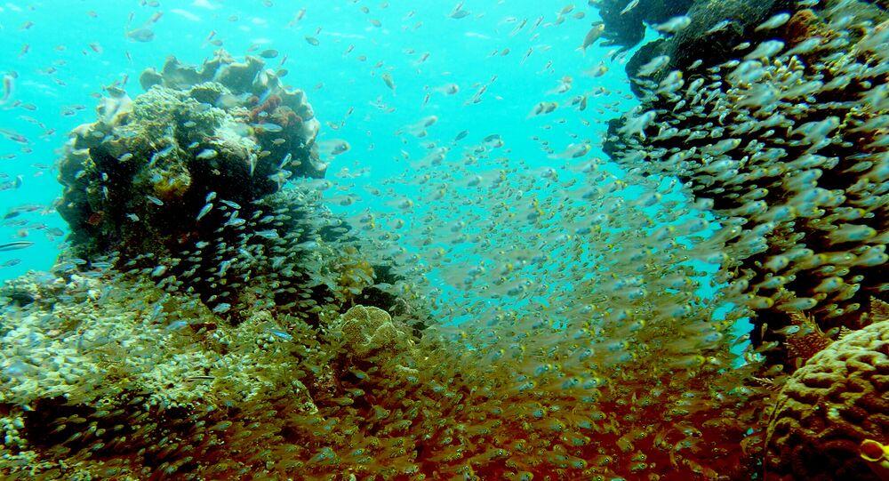 Peixes nadando entre recifes de corais depois de um navio de cruzeiro britânico ter colidido com recifes, causando grandes danos em Raja Ampat, 4 de março de 2017