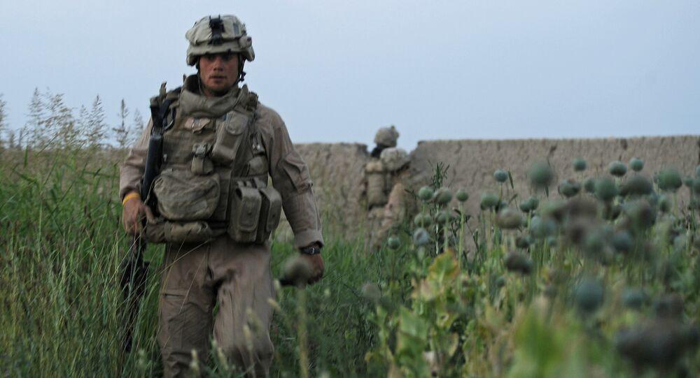Soldado norte-americano no campo de papoilas no Afeganistão