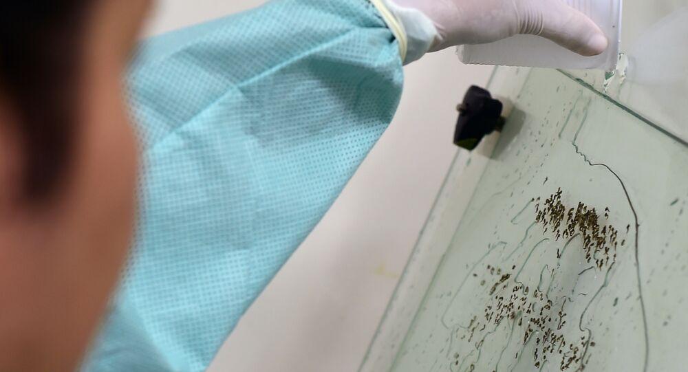 Segundo Anvisa, o Brasil pode se tornar o primeiro país do mundo a registrar uma vacina contra a dengue