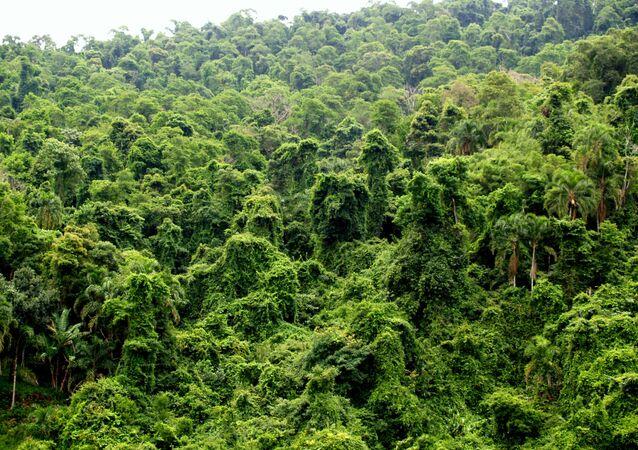 Selva de Brasil (archivo)