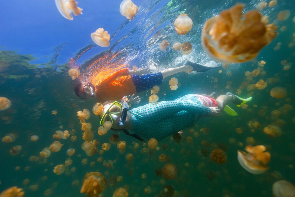 Graças a esta espécie de medusa, é possível nadar no lago mesmo sem roupas de mergulho