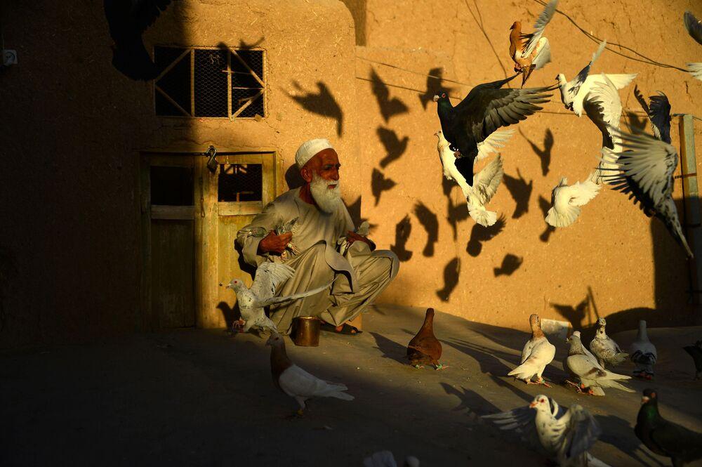 Criador de pombos afegão Abdul Gani, de 70 anos, alimentando as aves no telhado de sua casa na cidade afegã de Herat