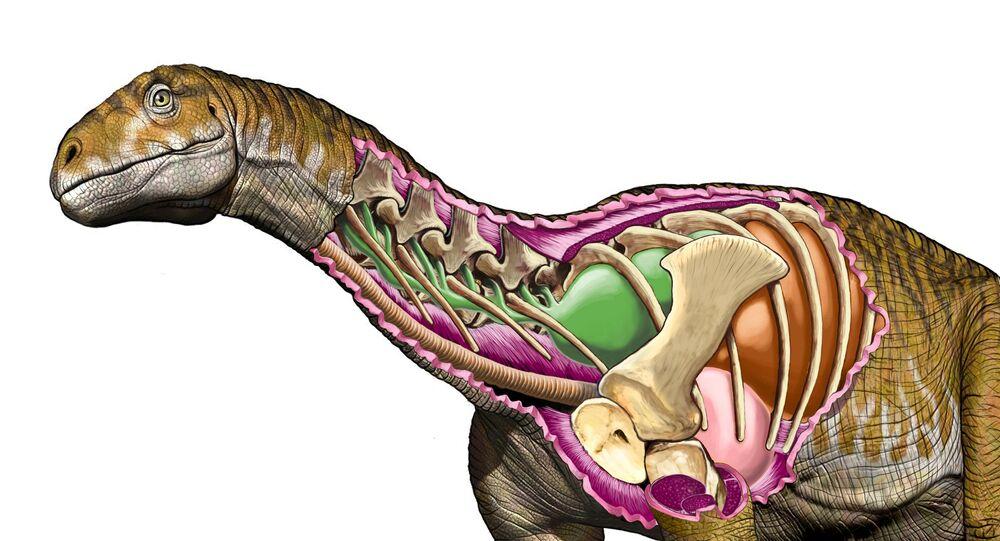 Imagem referencial do dinossauro Ingentia prima mostrando seu sistema respiratório desenvolvido