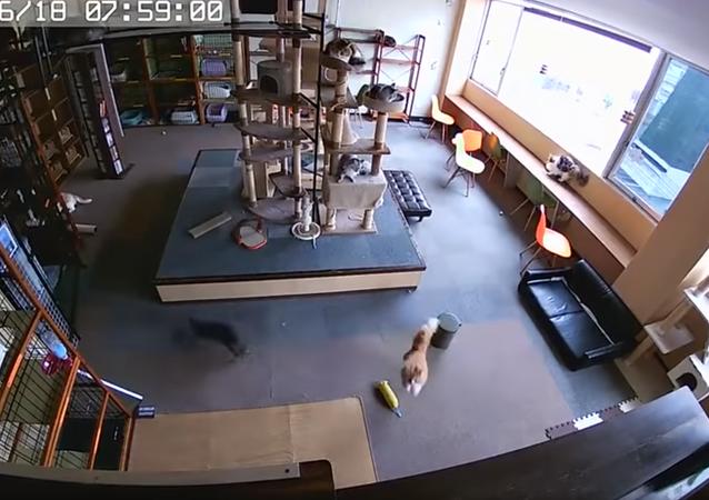 Gatinhos japoneses sentem terremoto segundos antes dos tremores começarem.