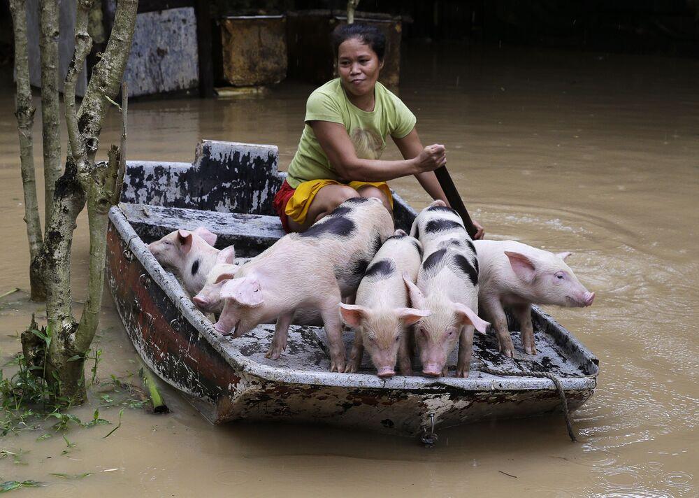 Mulher transportando porcos de barco após inundação nas Filipinas