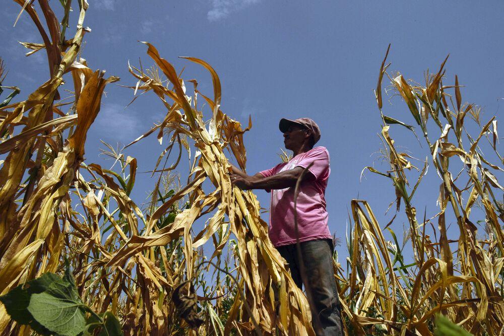 Fazenda da cidade salvadorenha de Usulután perde quase toda a sua colheita devido a altíssimas temperaturas e à falta de chuvas