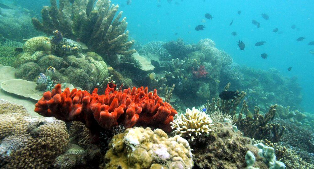 Vários tipos de corais, Filipinas, 27 de outubro de 2008 (imagem referencial)