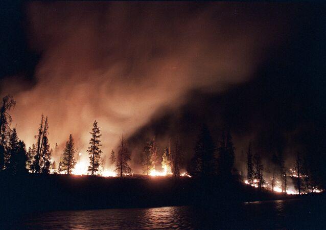 Incêndio florestal nos EUA (foto de arquivo)