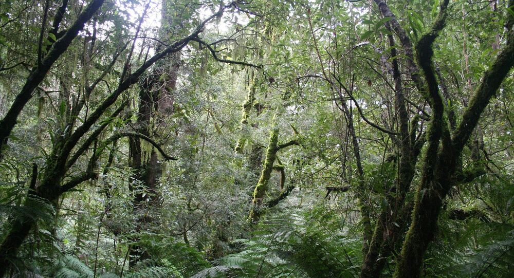 Bosques de Australia