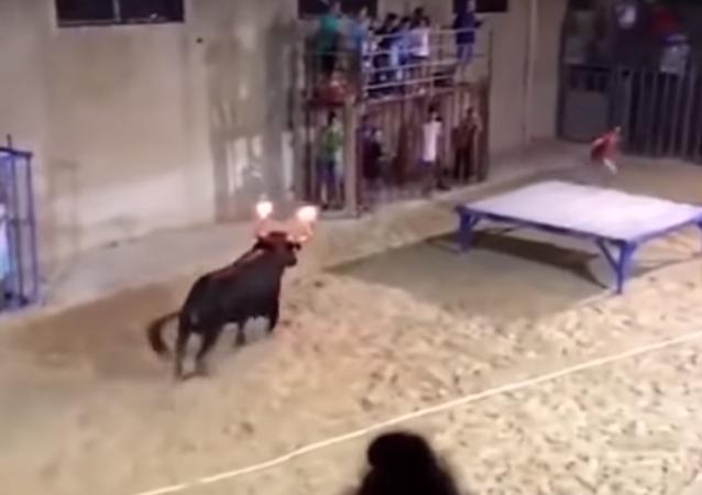 IMAGENS FORTES: touro com chifres em chamas lança mulher no ar