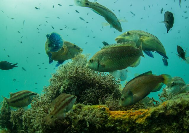 Peixes no barril no fundo do mar Negro, Crimeia