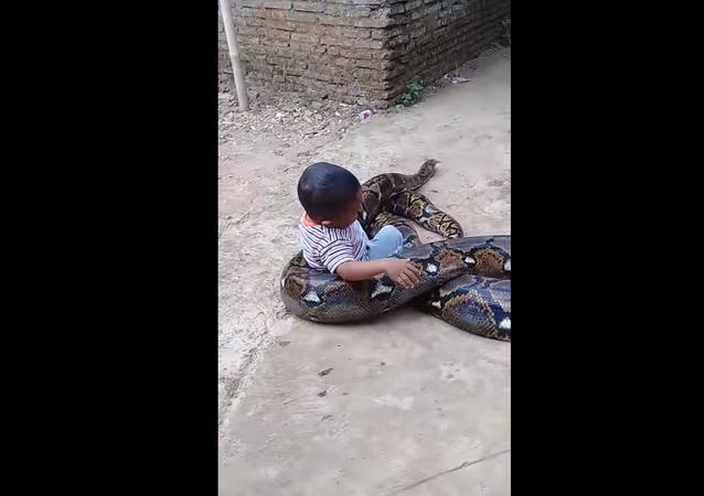 Bebê 'morre' de rir enquanto brinca com píton gigante